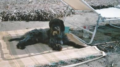 cane-mare-172256.660x368