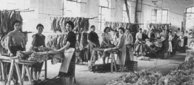 8-marzo-1908-cotton-new-york-1jpg